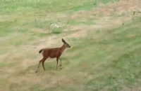 Deer Vs Snake To Rescue Baby Escape From Snake Hunt