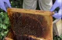 آموزش تخصصی پرورش زنبورعسل 02128423118-09130919448-wWw.118File.Com