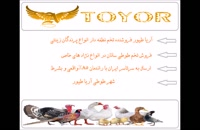 فروش تخم نطفه دار طوطی سانان باضمانت