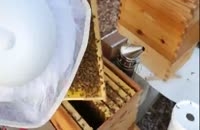 آموزش سیر تا پیاز پرورش زنبور عسل در 118 فایل