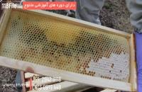 آموزش پرورش زنبور عسل بصورت کامل