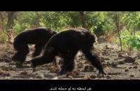 مستند خاندان ها 1 - شامپانزه