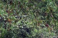 سیاره زمین 8 - جنگلهای گرمسیری