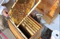 آموزش کامل زنبورداری در www.118File.Com