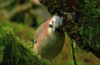 زندگی اسرار آمیز پرندگان 5