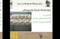 تخم نطفه دار اردک بسیار مرغوب و استاندارد برای جوجه کشی را از juje.ir خرید کنید