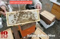 دوره آموزش پرورش زنبور عسل بصورت کامل