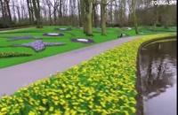 هلند، سرزمین گل های لاله