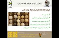 تخم نطفه دار اردک با راندمان هچ بالای 85%