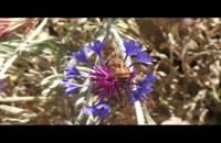 عسل طبیعی کوهستان طلایی شمال ایران