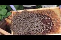 آموزش حرفه ای زنبور داری 02128423118- 09130919448 - wWw.118File.Com