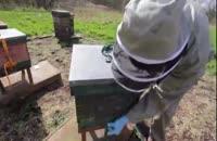 آموزش گام به گام پرورش زنبور عسل در wWw.118File.com