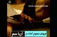 ویدیوی نیش زدن سوسک!