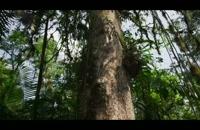 سیاره زمین 14 - جنگلها