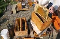 کاملترین آموزش زنبورداری در wWw.118File.Com