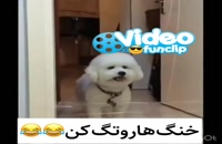 سگ خنگ