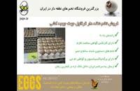 فروش تخم قرقاول کاملاً نطفه دار، تازه و مرغوب در juje.ir