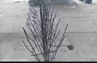 حفاظ شاخ گوزن | تابان حصار