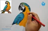 آموزش نقاشی از یک پرنده طوطی