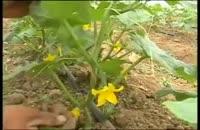 فیلم آموزشی سازه های گلخانه
