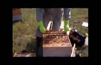 آموزش کامل زنبورداری ازصفرتا100 برای مبتدیان در 118فایل