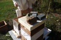 آموزش  کامل پرورش زنبور عسل از صفر تا صد