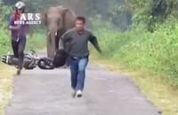 فرار انسانها از دست حیوانات!