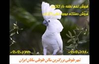 فروش تخم نطفه دار طوطی کاکادو