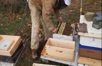 آموزش پرورش زنبور عسل بطور کامل و جز به جز