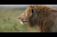 مستند خاندان ها 3 - شیر