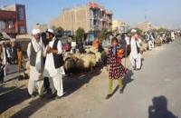 هرات افغانستان بازار گرم گوسفند فروشی