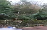 قطع درختان جاده کلاردشت توسط افراد ناشناس