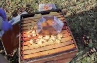 آموزش کامل زنبورداری در3سوت 02128423118-09130919448